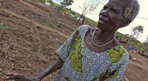 Katarin Ladu, a South Sudanese refugee living in a settlement called Pagirinya in northern Uganda, stands on the small plot of land where she is trying to grow pea leaves. Like hundreds of thousands of others, she primarily subsists on World Food Program rations of maize, beans, sorghum, and other staples.