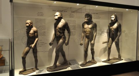Autism human evolution - The story of human origins is much more varied and complex than we often recognize.