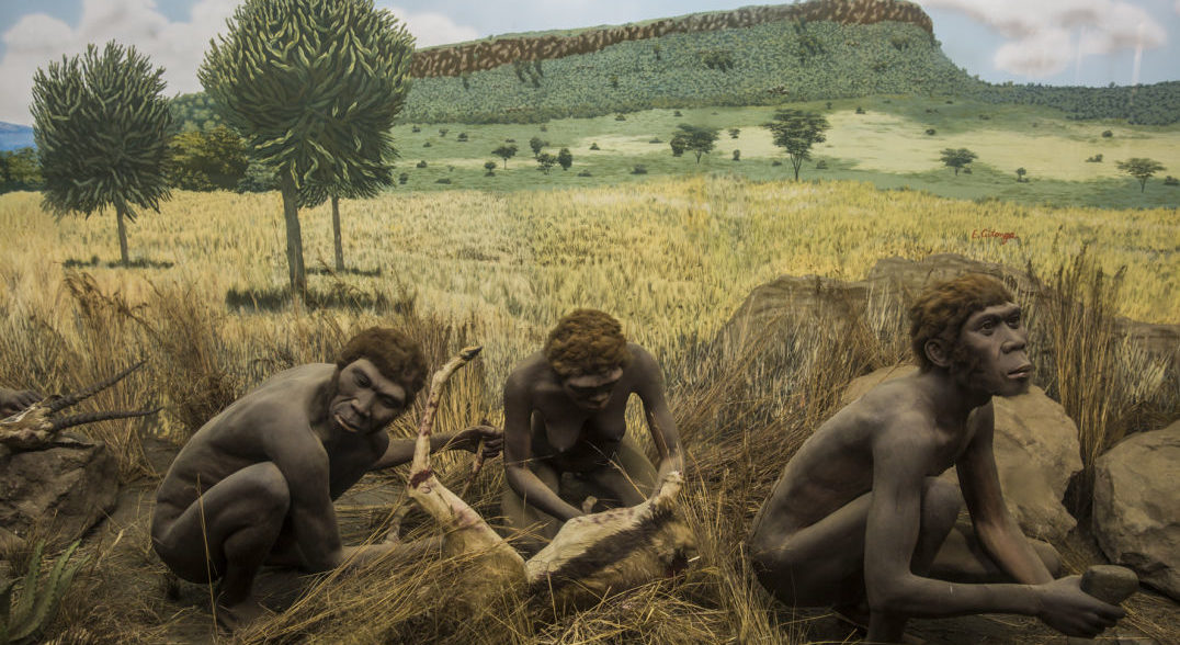 A diorama at the Nairobi National Museum portrays early hominids processing game with tools. But which of the ancestors of Homo sapiens was the first to butcher animals?