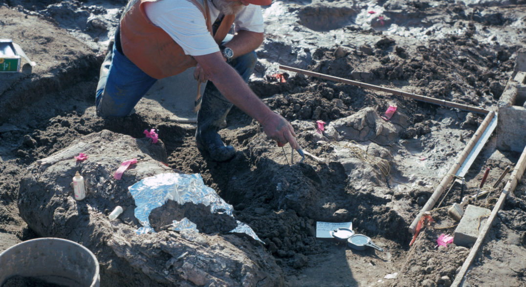 Rock fragments found near part of a mastodon tusk in San Diego, California, suggest that a hominin species lived there about 130,000 years ago. The finding could dramatically alter the narrative of when humans arrived in North America.