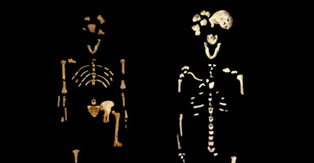 "hominin burial - The skeleton on the left is ""Lucy,"" an Australopithecus afarensis that is 3.2 million years old. The one on the right is a Homo naledi called ""Neo,"" which is roughly 250,000 years old."