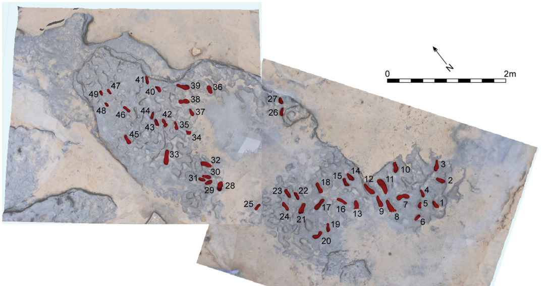 Photogrammetry of the Happisburgh footprints shows the group's orientation and direction.