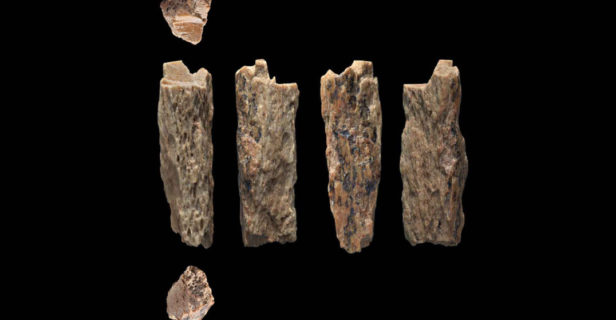 anthropology in 2019 - This image shows various views of the pinky bone of a Denisovan-Neanderthal hybrid found in Siberia.