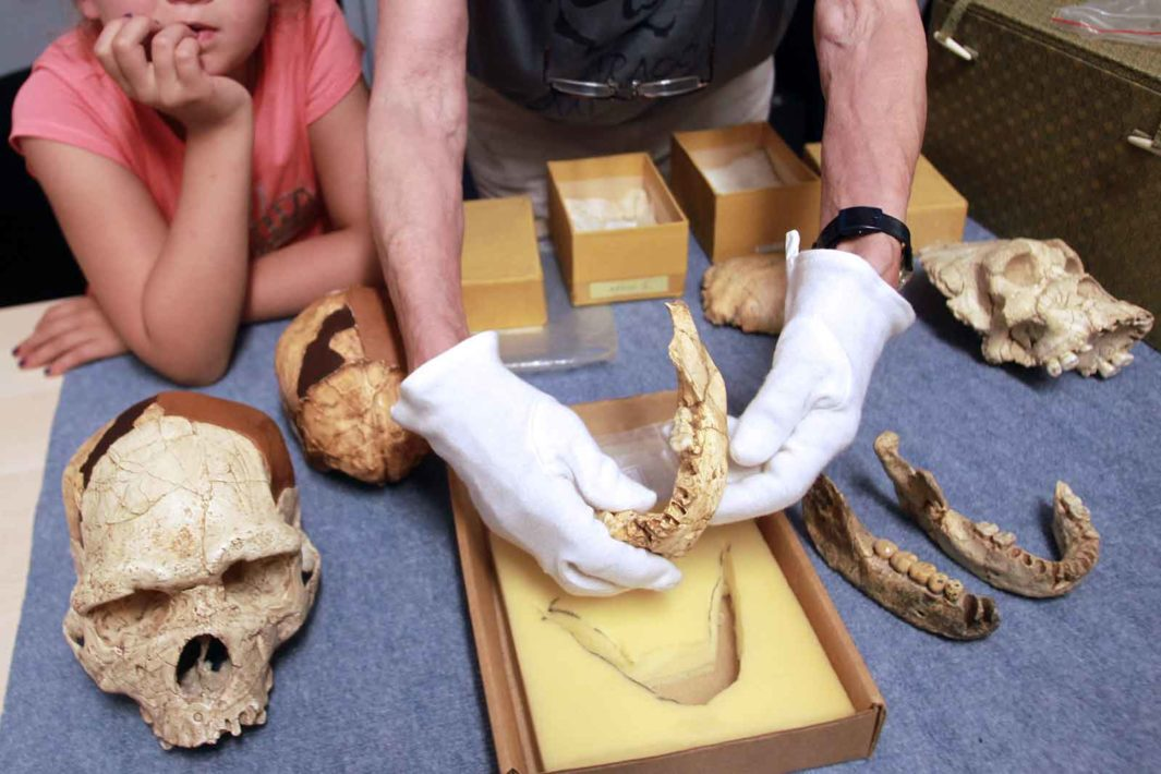 This 450,000-year-old jaw from Tautavel, France, held by a paleontologist, came from an archaic human.