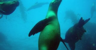 San Miguel Island - Sea lion populations off the California coast bounced back after the Marine Mammal Protection Act of 1972.