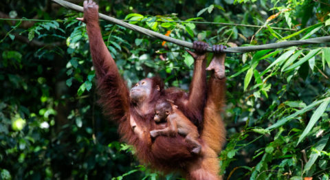 primate motherhood