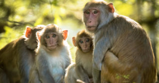 multispecies - Macaques sit near Florida's Silver River.