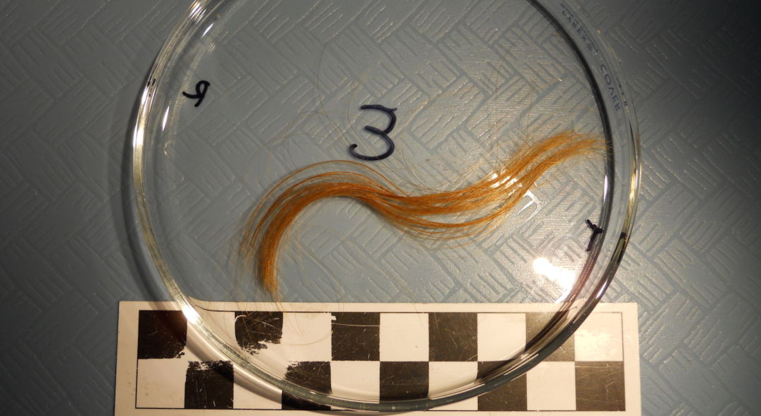 death seasonality - A lock of hair from Edith Cook, a girl who died in 1876, offers a window into her death.