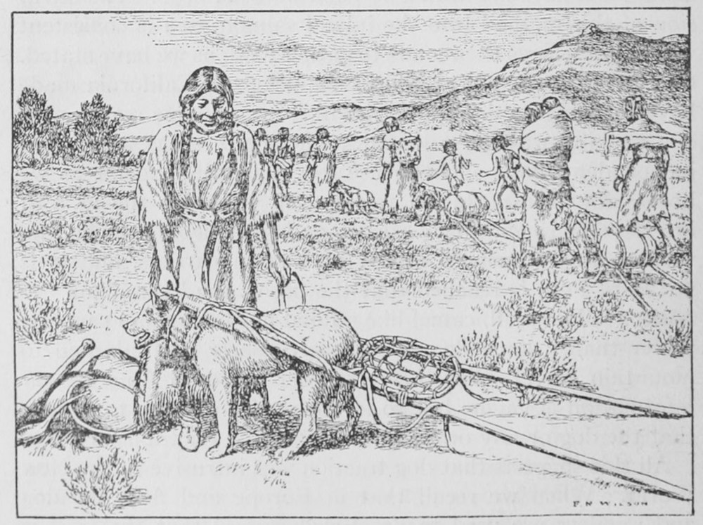 This early 20th-century illustration shows a Native American community using dog travois to help carry goods.