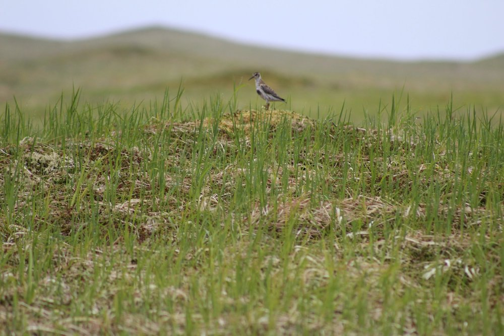 A small bird sits atop a dirt mound covered with shoots of grass.