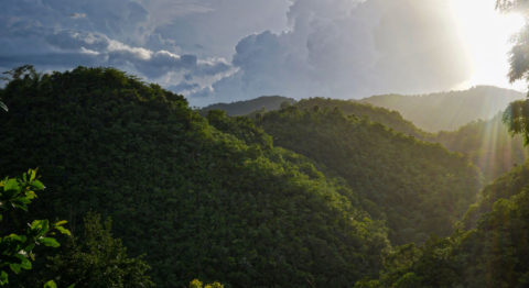 Rays of sunlight shine down over hills covered in lush green foliage.